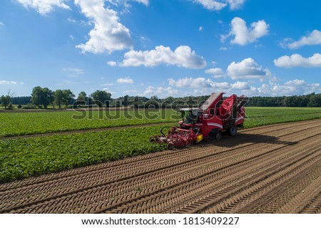 Photo of  Farmers harvest sugar beet in a country field. Sugar beet harvest with a Sugarbeet harvester an agricultural machine.