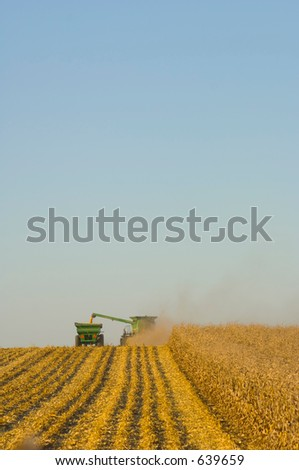 Farmers harvesting corn