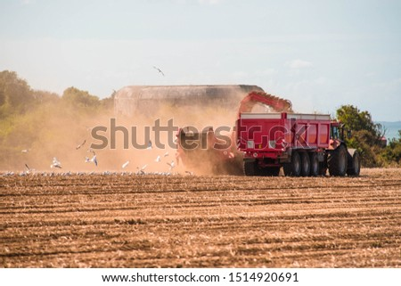 farmers harvesting onions in the fields