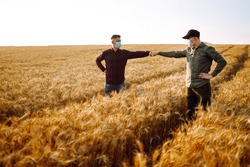 Farmers in sterile medical masks on his face greet their elbows on a wheat field. Stop handshakes. Agriculture and harvesting concept. Covid-19.