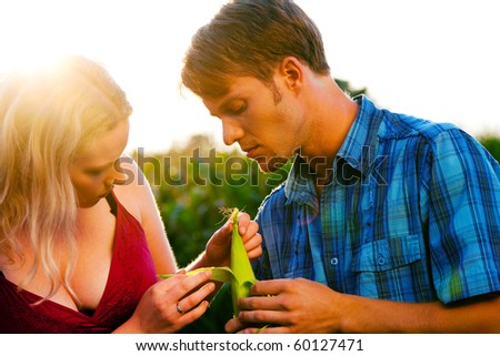 Farmers - man and woman - checking the corn for the harvest in  a beautiful sunset - stock photo