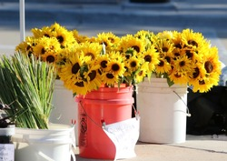Farmers market goods display. Flowers for sale in sunlight at seasonal farmers market. Beautiful sunflowers bouquets in piles. Agriculture and farming background, small business concept.