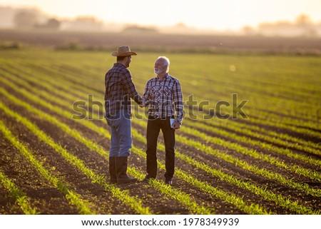 Farmers reaching agreement deal standing in corn field. Two men shaking hands satisfied happy.