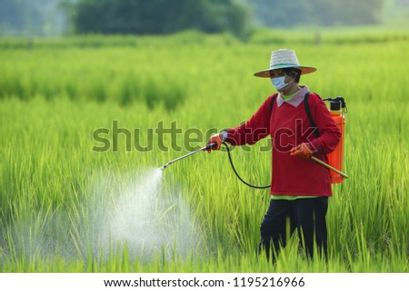 Farmers spray insecticides to rice using insecticide sprayers with inappropriate protection in rice fields.Use of pesticides is hazardous to health. ストックフォト ©