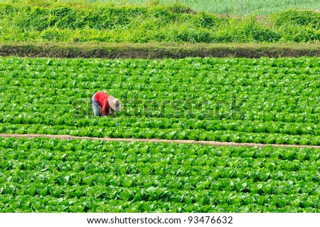 Farmers to grow vegetables in the vegetable garden - stock photo