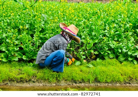 Farmers to maintain agricultural crops to ensure the quality of the crop