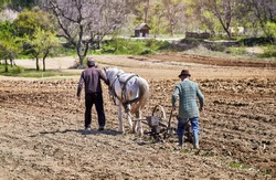 Farmers with horse-drawn tools. Horse-drawn drill working the field. Farmers with horse-drawn seed drill.