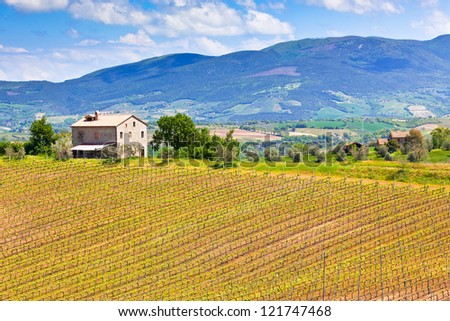Farmhouse and Vineyard Landscape, Tuscany, Italy