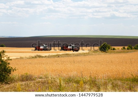Farming, agriculture. Season of harvesting grain, cereals. Two harvesters working in the field on the harvest of ripe wheat