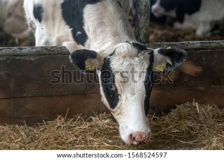 farming, livestock farming in Ukraine