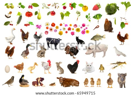 farming  objects on a white background