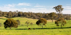 Farmland and paddocks near Maldon and Castlemaine on a clear sunny day in the Victorian goldfields, Australia