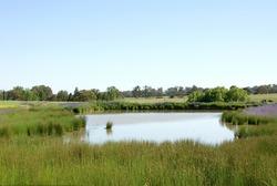 Farmland in South-Western New South Wales, Australia