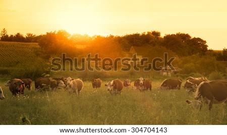 Farmland summer scene in sunset