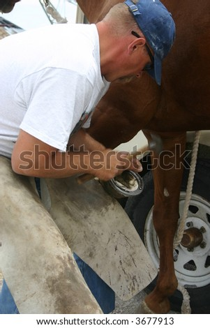 farrier attaches horseshoe to horse hoof with nails