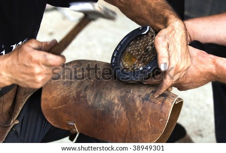 Farrier attaches horseshoe to the hoof with nails