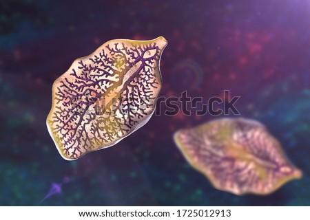 vagy fascioliasis)