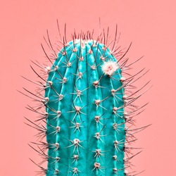 Fashion Cactus green colored on pink background. Minimalism. Contemporary Art gallery Style. Creative cactus concept. Close-up tropical cacti plant, pastel color