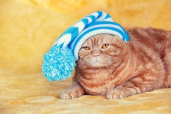 Fashion portrait of a funny ginger British Shorthair cat in clothes. The cat in stripped knitted cap with pompom lying on yellow soft blanket