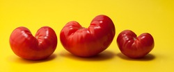 Fashionable ugly organic tomatoes in the form of hearts on a yellow background. Ugly food concept, ugly forms of organic vegetables.