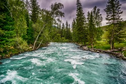 Fast water stream in mountain river with coniferous forest, Altai republic, Siberia, Russia