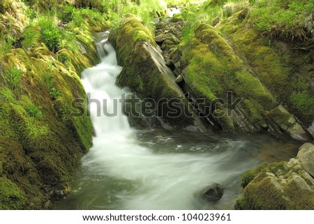 Fast, waterfall, moss, ferns, Arroyo del Valdecesar, Leon, Spain