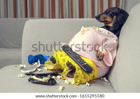 fat dog couch potato eating a popcorn, chocolate, fast food and watching television. Parody of a lazy person Сток-фото ©