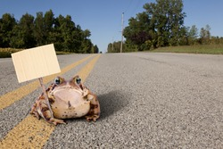 Fat toad sitting on a quiet, country road holding a cardboard sign.  Ready for your text!