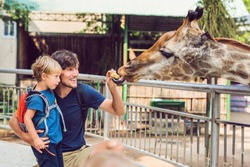 Father and son watching and feeding giraffe in zoo. Happy kid having fun with animals safari park on warm summer day
