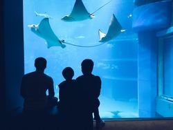 Father and two sons watching fish in a large aquarium,silhouette.