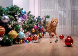 Fault of the pet cat - fallen Christmas tree. Ruins and the end of Christmas. fear of punishment. broken balls on the floor. Ginger cat hide behind the tree