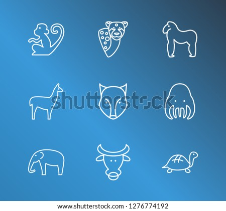 Fauna icon set and turtle with wolf, elephant and bull. Tortoise related fauna icon  for web UI logo design.