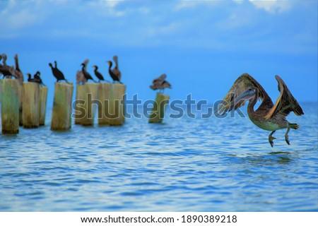 fauna y ambiente de mar Zdjęcia stock ©