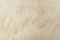 Faux fur with a long pile. Pastel cream artificial fabric, can be used as background. Fur for toys