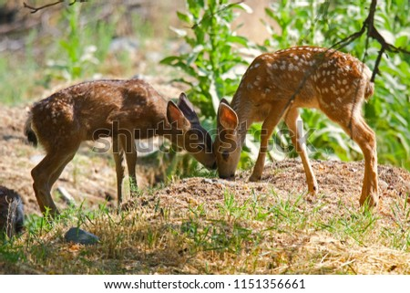 Fawns head to head #1151356661