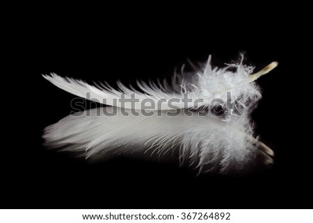 Feather #367264892