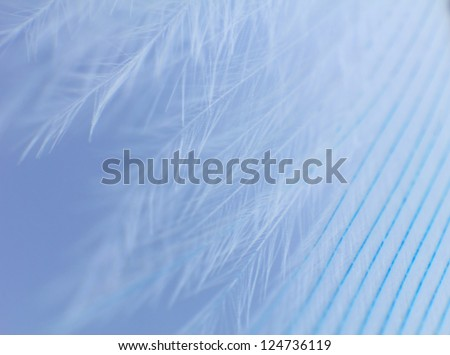 Feather close up