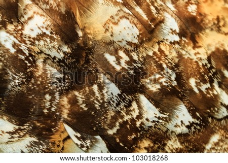 feather detail owl eagle