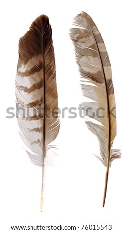 Feather from Birds of Preys (buzzard and owl)