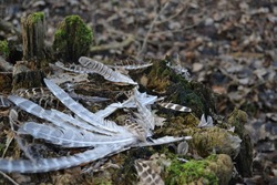 Feather in treestump in the nature