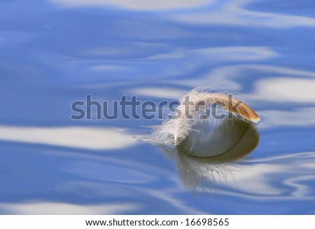 feather in water under blue sky and white cloud