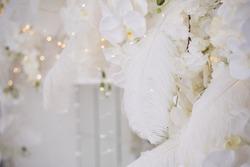 feather in wedding decor arch
