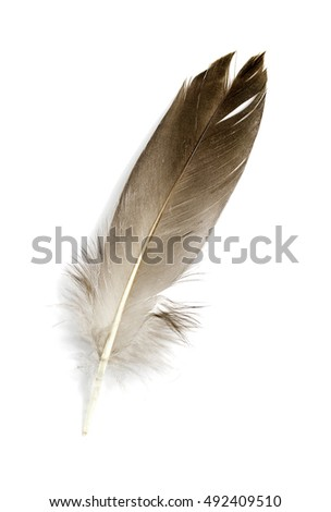 Feather isolated on the white background #492409510