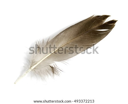Feather isolated on the white background #493372213