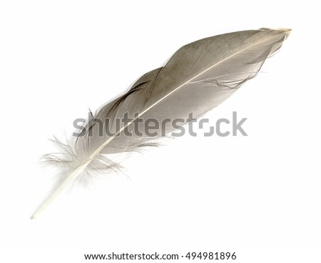 Feather isolated on the white background #494981896