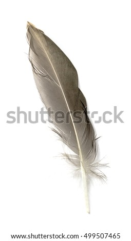 Feather isolated on the white background #499507465