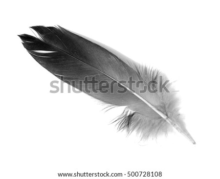 Feather isolated on the white background #500728108