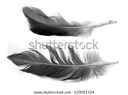 Feather isolated on the white background #520081504