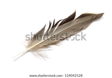 feather of a bird on a white background #124042528