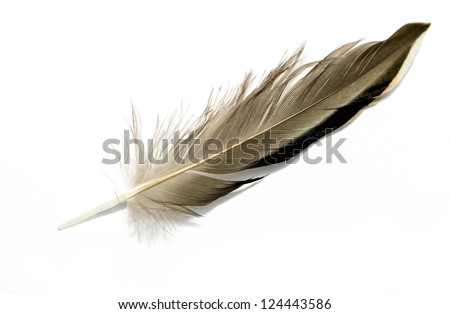 feather of a bird on a white background #124443586